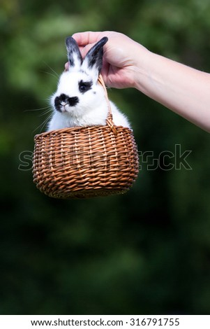 A hand holding wicker basket with bunny rabbit at green grass background - stock photo