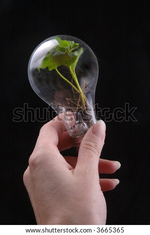 A hand holds a light bulb that contains a vibrant, green plant.