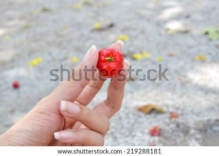 A hand picking a cherry against the sand in the farm