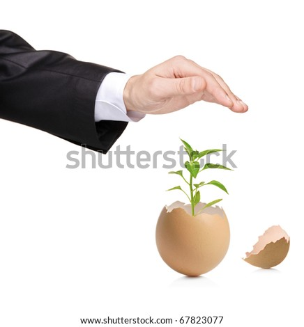A hand protecting a green plant in eggshell isolated on white background