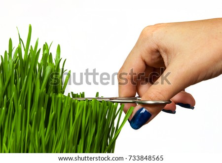 a hand with scissors cutting grass isolated on white background