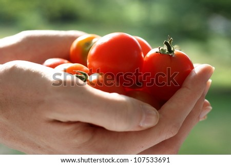 A handful of cherry tomatoes - stock photo