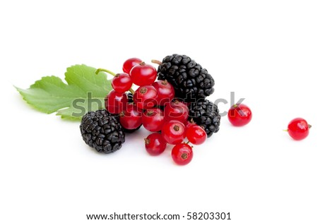 A handful of fresh ripe mulberries and red currants - stock photo