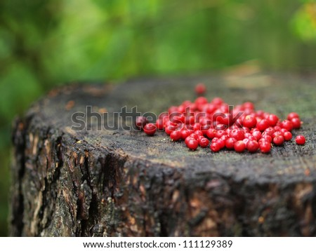 A handful of red cranberries on a tree stump - stock photo