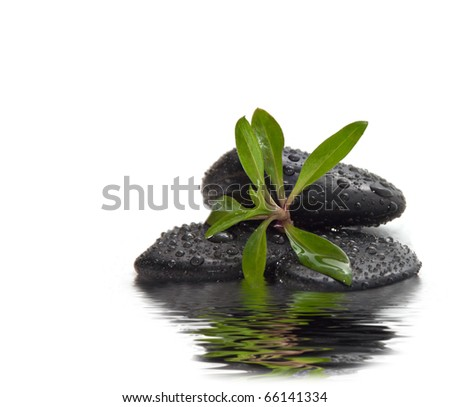 A handful of stones with the young green plants. - stock photo