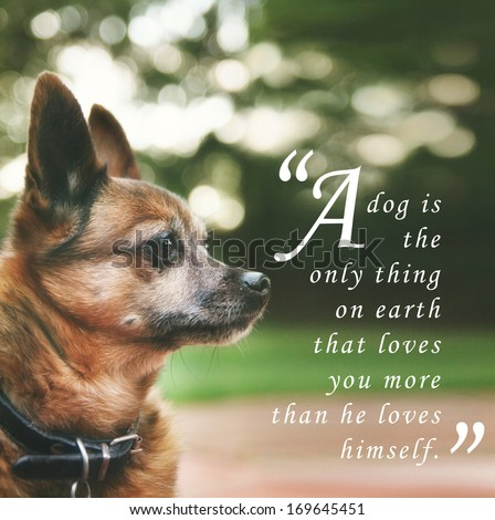"a handsome chihuahua mix senior dog with dark muted tones and a quote: ""a dog is the only thing on earth that loves you more than he loves himself"" - stock photo"
