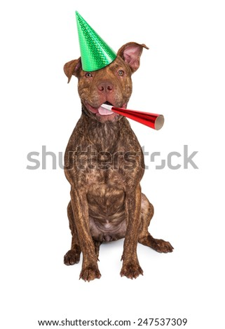 A happy and friendly mixed breed dog wearing a party hat with a noise maker