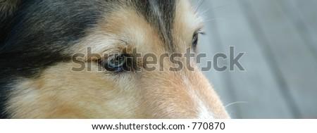 A happy dog. - stock photo