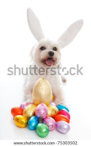 A happy easter bunny dog with lots of easter eggs.  White background.