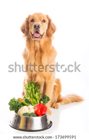 A happy golden retriever dog sitting next to a bowl of fresh vegetables. - stock photo