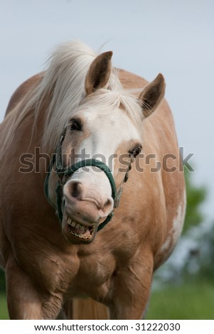 a happy horse with a big smile - stock photo