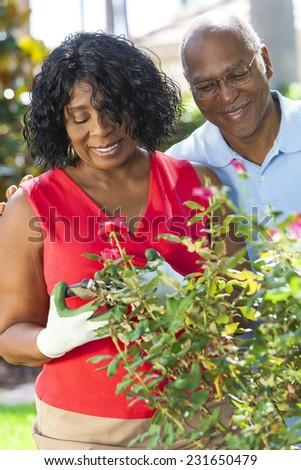 A happy senior African American man and woman couple in their sixties outside gardening in the garden together smiling cutting roses - stock photo