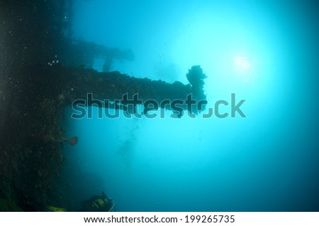 A hard coral on Umbria II world war ship wreck in red sea