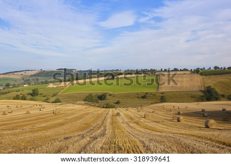 a harvest landscape vista in rolling hills on the yorkshire wolds england with round straw bales and patchwork fields under a blue cloudy sky in autumn - stock photo