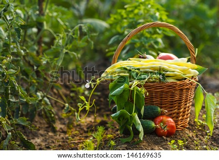 A harvest of season vegetables in a wicker basket  - stock photo