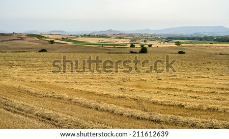 A harvested wheat field in La Rioja (Spain, Europe)