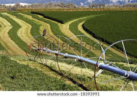 A hawk sits on top of an irrigation system in a field. - stock photo