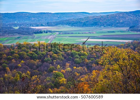 A hawk soars high above Jenny Jump Forest during Autumn in Warren County New Jersey.