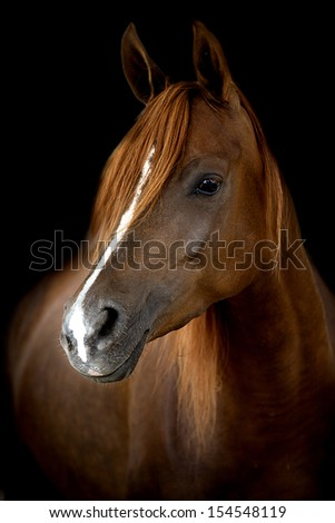 A head of a horse against a black background  - stock photo
