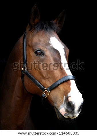 A head shot of a bay horse with a white blaze against a black background. - stock photo