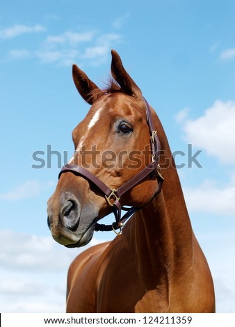 A head shot of a chestnut horse against the sky - stock photo