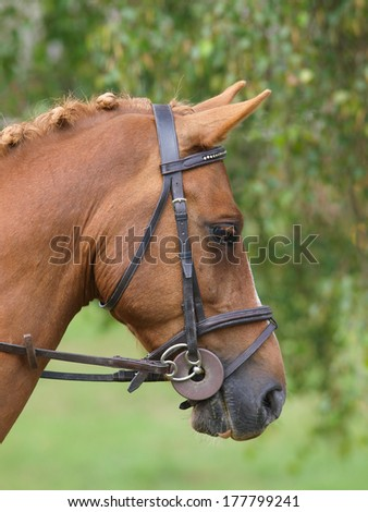 A head shot of a horse in a bridle.