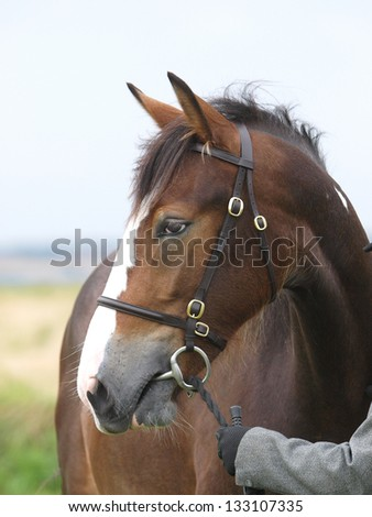 A head shot of a horse in a bridle during a competition