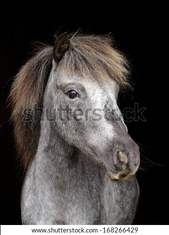 A head shot of a pretty horse against a black background - stock photo