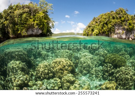 A healthy coral reef grows in Palau's beautiful lagoon. The diverse marine life found within the lagoon is enclosed by hundreds of limestone islands that are ancient, uplifted reefs. - stock photo