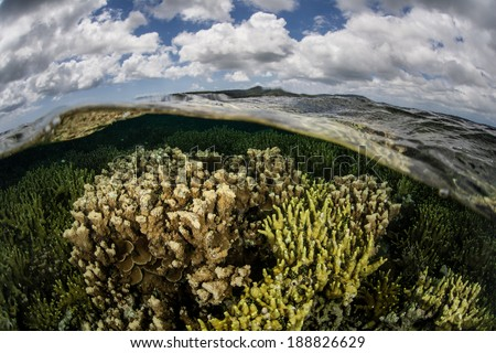 A healthy coral reef grows in the shallows near the island of Yap in Micronesia. The reefs on Yap are regrowing quickly after being devastated by recent typhoons. - stock photo