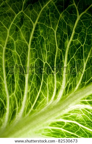 A healthy image of a green lettuce leaf - stock photo