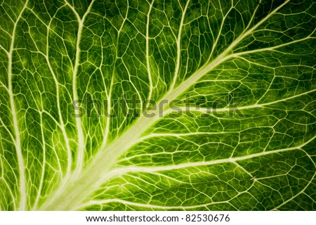A healthy image of a green lettuce leaf