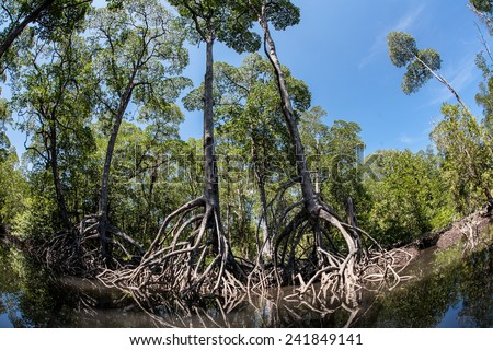 A healthy mangrove forest grows in the Mergui Archipelago off the southern coast of Myanmar. Mangroves are vital nursery habitat for many species birds, fish and invertebrates. - stock photo