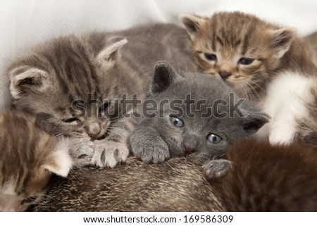 A heap of cat is cuddly babies on their mother