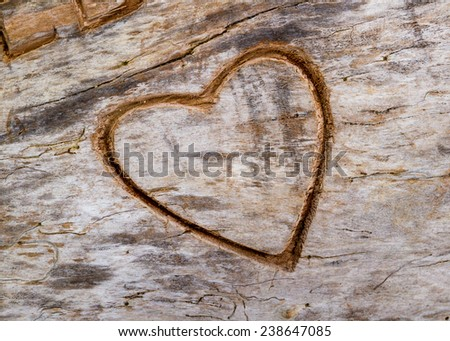 A heart engraved on the bark of an old tree trunk - stock photo