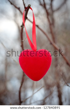 a heart hanging on a tree branch - stock photo