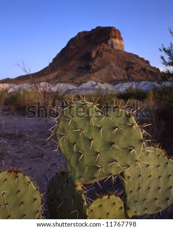 A heart shaped cactus in Big Bend National Park located in west Texas. - stock photo