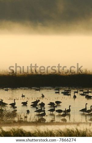 A heavy layer of fog raises off the water at a wetland wildlife refuge. - stock photo