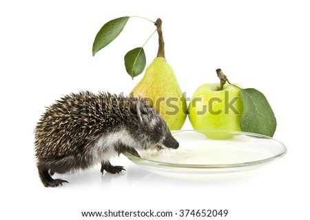 a hedgehog drinking milk, pear and apple on a white background - stock photo