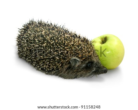 A hedgehog with yellow-green apple - stock photo
