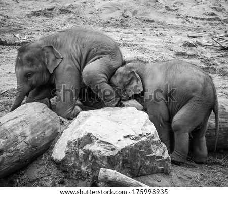 A Helping Trunk - stock photo