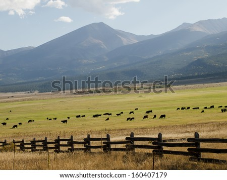 A herd of cattle in a green pasture with a mountains. - stock photo