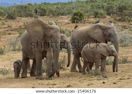 A herd of Elephant arrive for a drink at the waterhole