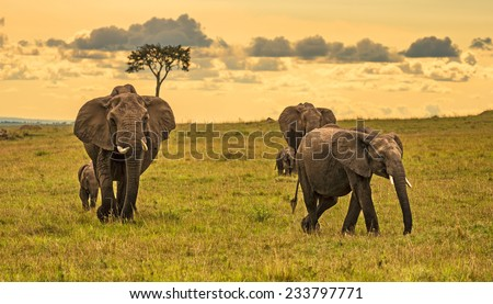 A herd of elephants (Loxodonta africana) with two babies, Maasai Mara National Reserve, Kenya - stock photo