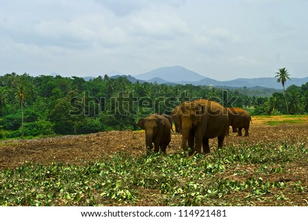 A herd of elephants on the landscape of the background.