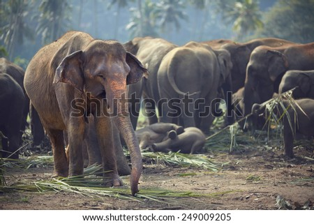 A herd of elephants stopped to rest and have a snack - stock photo