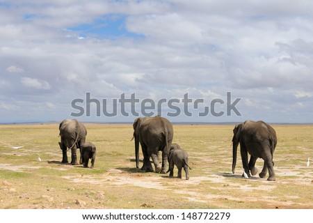 A herd of elephants with baby, Amboseli, Kenya - stock photo