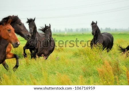 A herd of horses, friesian and racehorse - stock photo