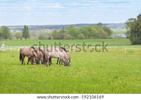 a herd of horses in the pasture - stock photo