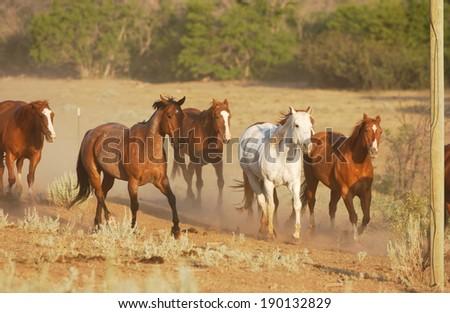 A herd of horses running - stock photo